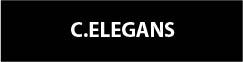 c elegans button