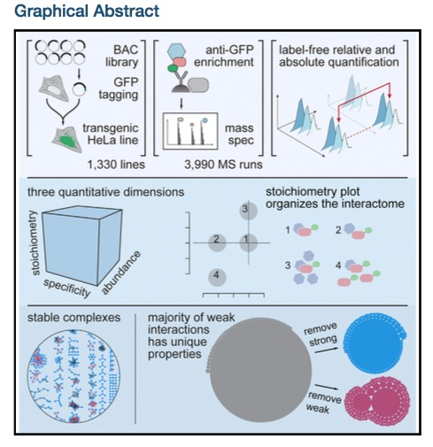human interactome graphical abstract